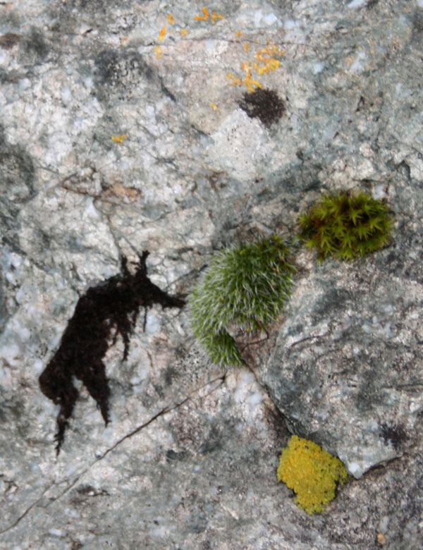 'monster' lichens on Ordovician Dolerite