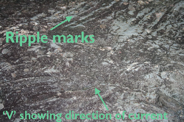 Ripple marks in Dolomitic Carboniferous Limestone on the site